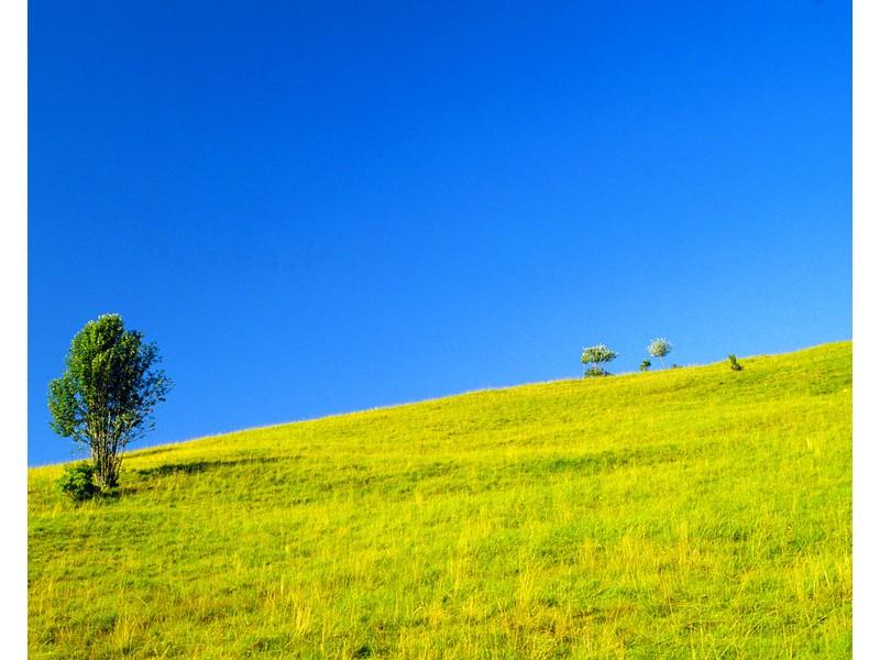 Grassy Hillside