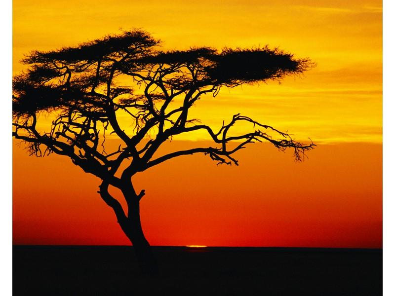 Acacia Sunset