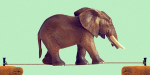 How reckless are you? article image with elephant balancing on row