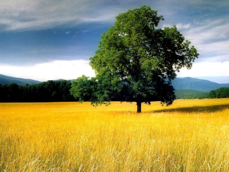 Nature Incredible